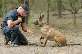 trainer working with dog on lying down